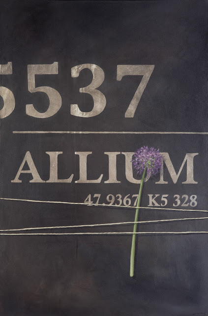 original_allium5537